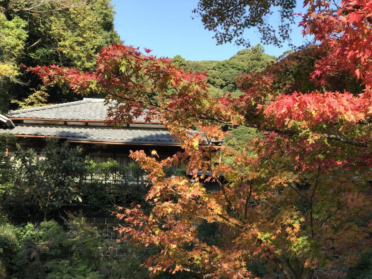 デートコースとしても使える!おすすめ鎌倉観光プラン〜紅葉と陶芸と大仏